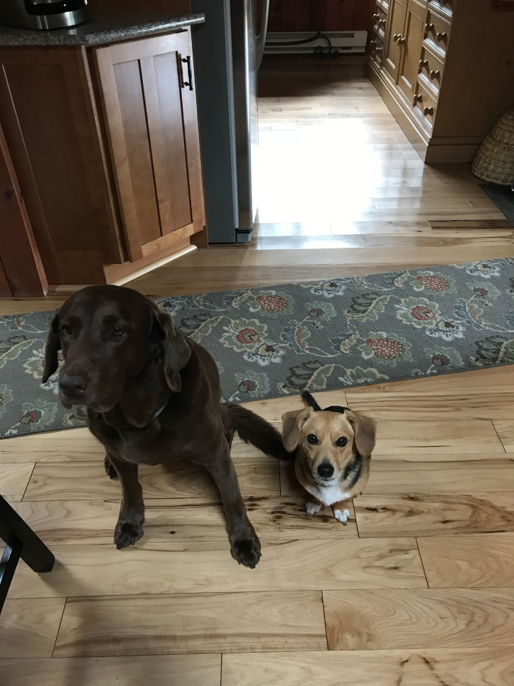 begging dogs